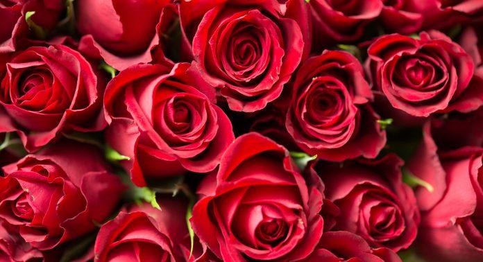 San Valentín USMA